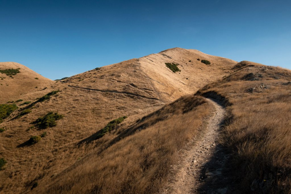 A path leading through large golden grass covered hill on the Skyline Walkway in Wellington, New Zealand.