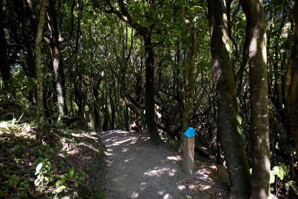 A footpath leading through a vast forest of tall trees on the Northern Walkway.