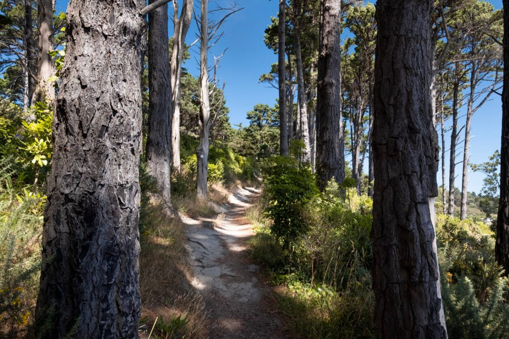 A clear path through various trees in a forest on the Southern Walkway trail.