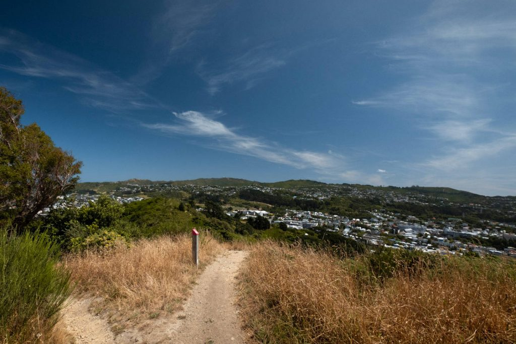 A path on a hiking track leading through the town belt of Wellington, New Zealand with grassy hills in the background with lots of houses on the hills. The sky is bright blue with a few whispy clouds hovering.