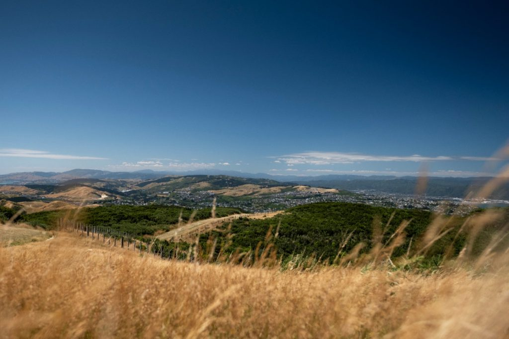 A photo in golden grass looking over the landscape of Wellington, New Zealand on the Northern Walkway trail.