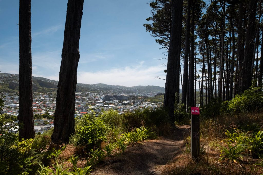 Looking back over the city of Wellington, New Zealand through the cover of a few trees during a walk on the Southern Walkway track.
