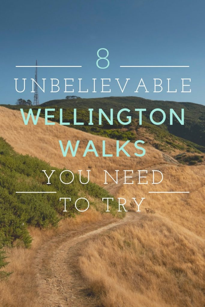 A track leading through golden grassy hills on one of Wellingtons Walks.
