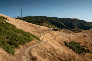 A path leading through a number of grass covered hills leading towards a large television tower that is visible in the distance on the Skyline Walkway.