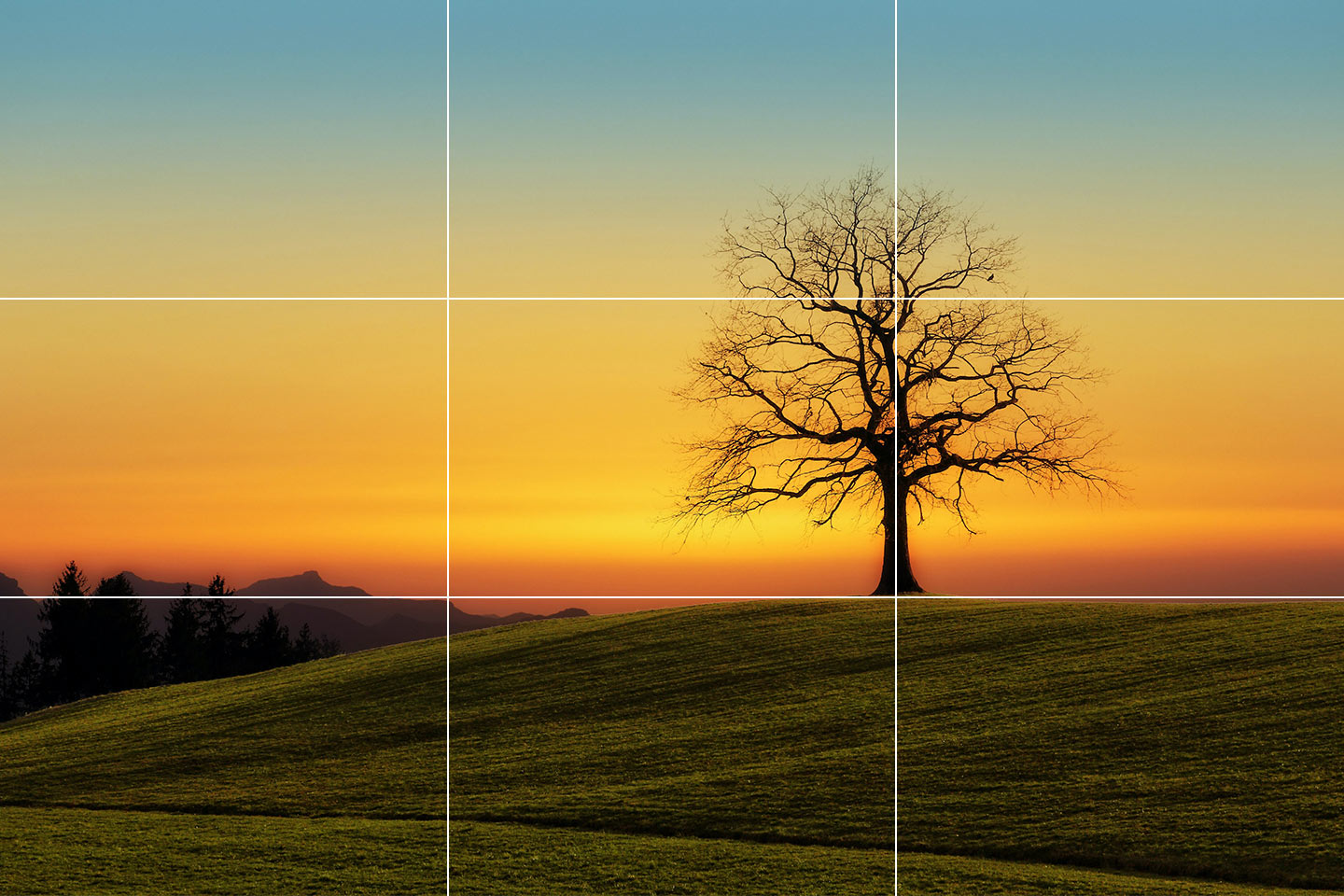 A photo of a tree with a beautiful sunset in the background. A rule of thirds grid is positioned on top of the photo. This demonstrates an important compositional rule for a landscape photographer to understand.