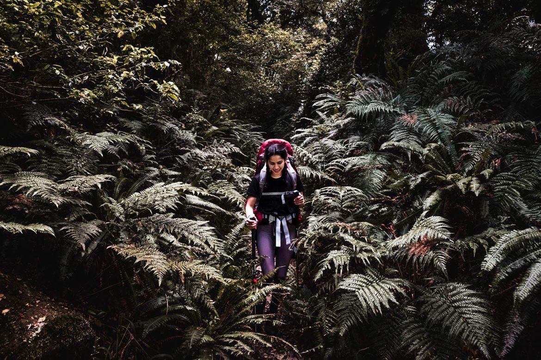 A woman walking through the ferns found on the Lake Waikaremoana Great Walk.