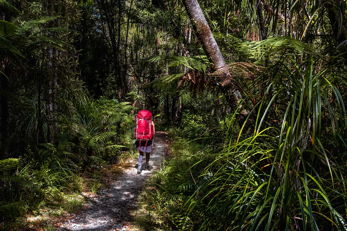 A woman walks along a path through tropical trees with a large red bag on her back.