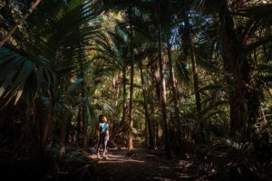 A woman stands under Nikau palm trees showing the scale of the trees around her.