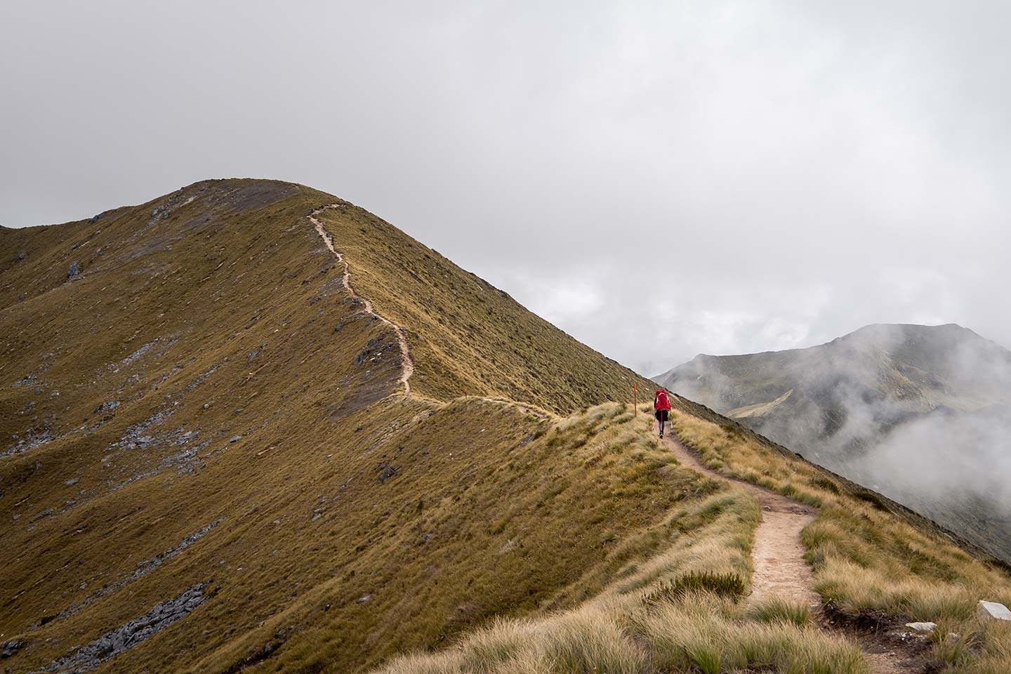 A long ridge line travels up a tussock covered mountain on the Kepler Track in the Fiordland region.